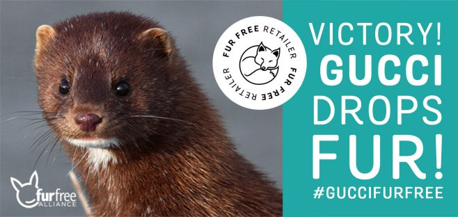 Gucci goes fur-free: major step forward for the fashion industry